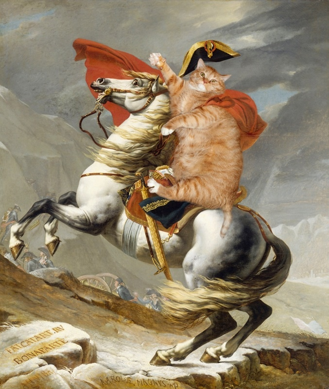 napoleon bonaparte as cat